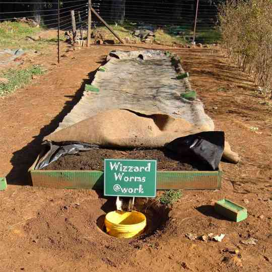 General Purpose Worm Farm - Wizzard Worms
