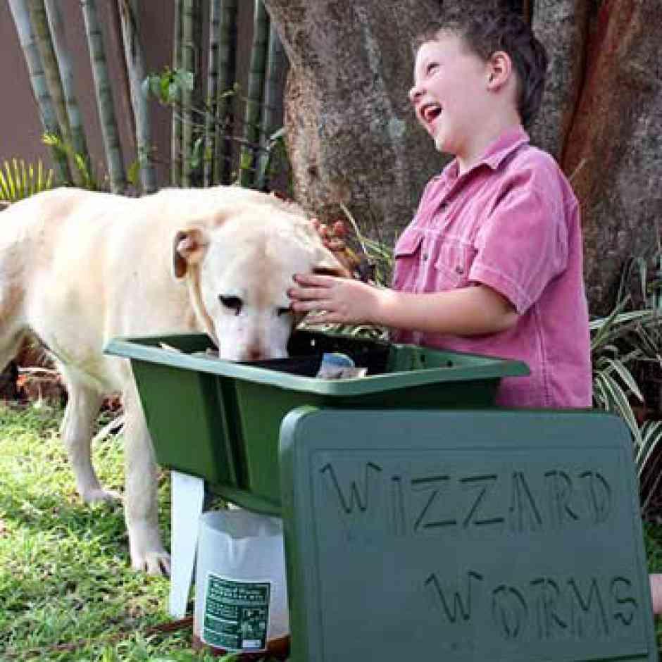 Small Green Worm Farm - Wizzard Worms