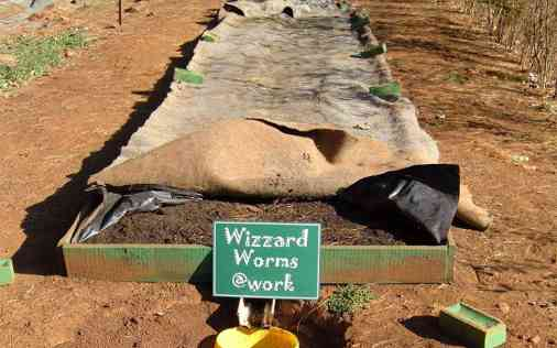 General Purpose Worm Farm - Wizzard Worms